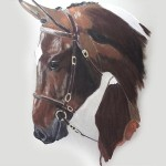 Olwen Jones Animal Portraits