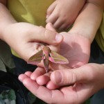 Saron School pupils marvelled by moths!