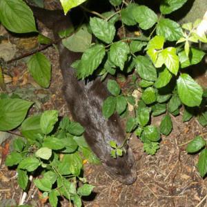 Sightings of the Solva Otter