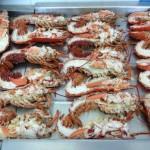 Cardigan Bay Shellfish