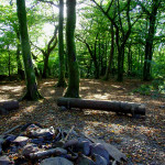 Historic maps used to protect Gower ancient woodland