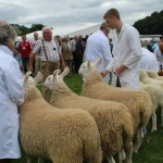 Community comes together for Llanfyllin Show