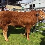Royal Welsh Winter Fair Buyers focus