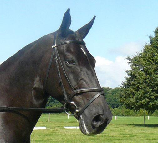 Royal Welsh Spring Festival has horses