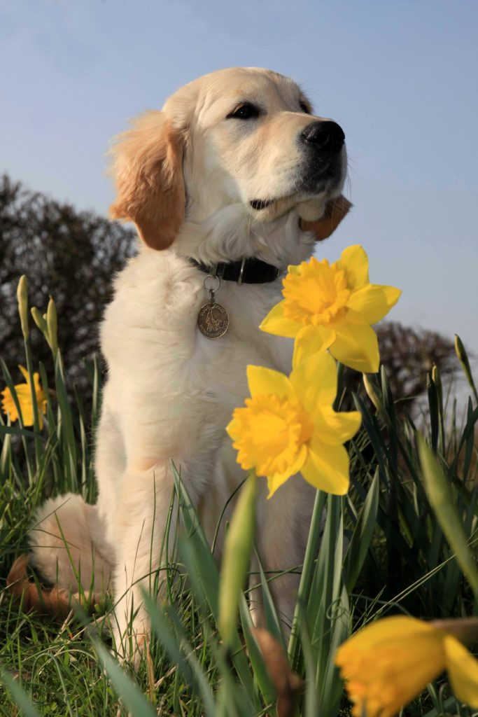 Guide Dogs Cymru will be attending the Monmouthshire Food Festival