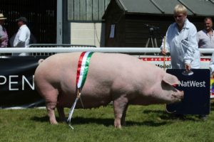 another great Royal Welsh Show