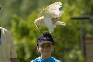 royal welsh falconry