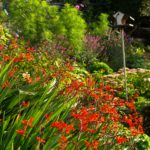 National Gardens Scheme and Perennial announce new partnership