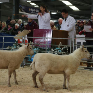 royal welsh winter fair mccartneys auctioneers