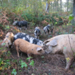 Monmouthshire Food Festival warmly welcomes Forest Pig Charcuterie