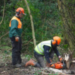 Pembrokeshire Coast – Trainees tackle invasive species at Trecwn with Stitch in Time project