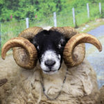 Royal Welsh – Why you should visit the Spring Festival next month…