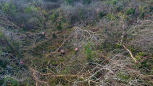 Pembrokeshire Coast National Park illegal tree felling 2