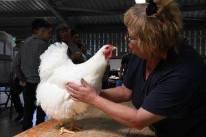 royal welsh spring chicken
