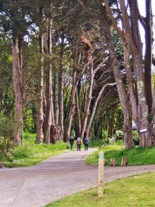caldey island paths 1